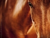 horse-photography-in-perth