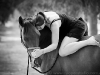 wa-horse-photography