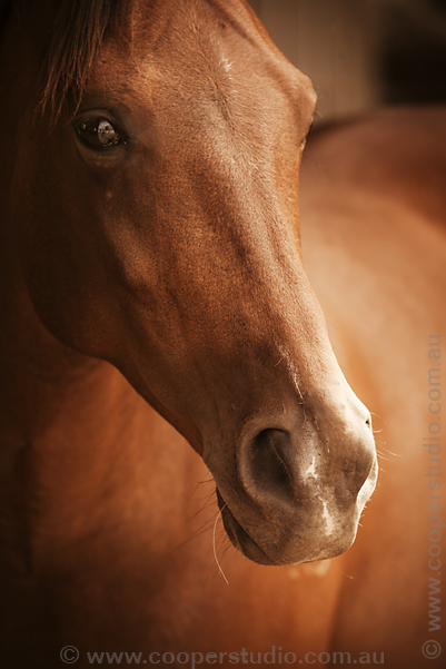 horse-photography