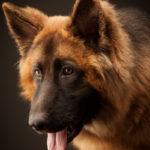 Fremantle Pet Photographer