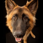 Perth Pet Photographer