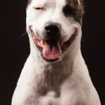 Happy Bull Terrier